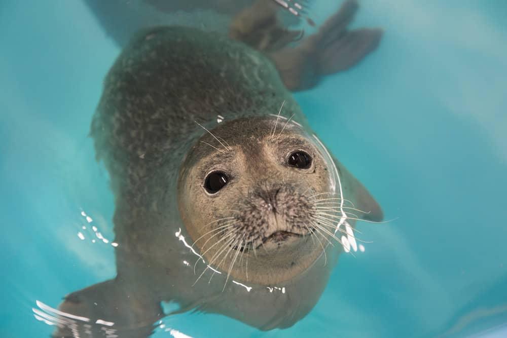 Photo: National Aquarium