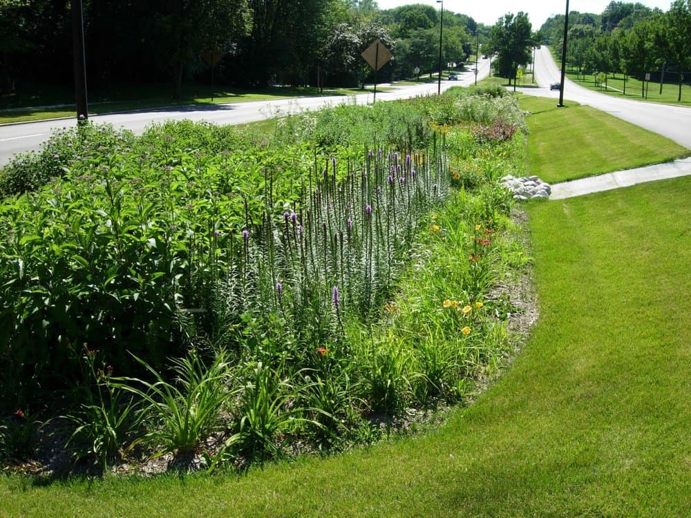 Bioswales are designed to capture and treat stormwater.  Photo by Aaron Volkening