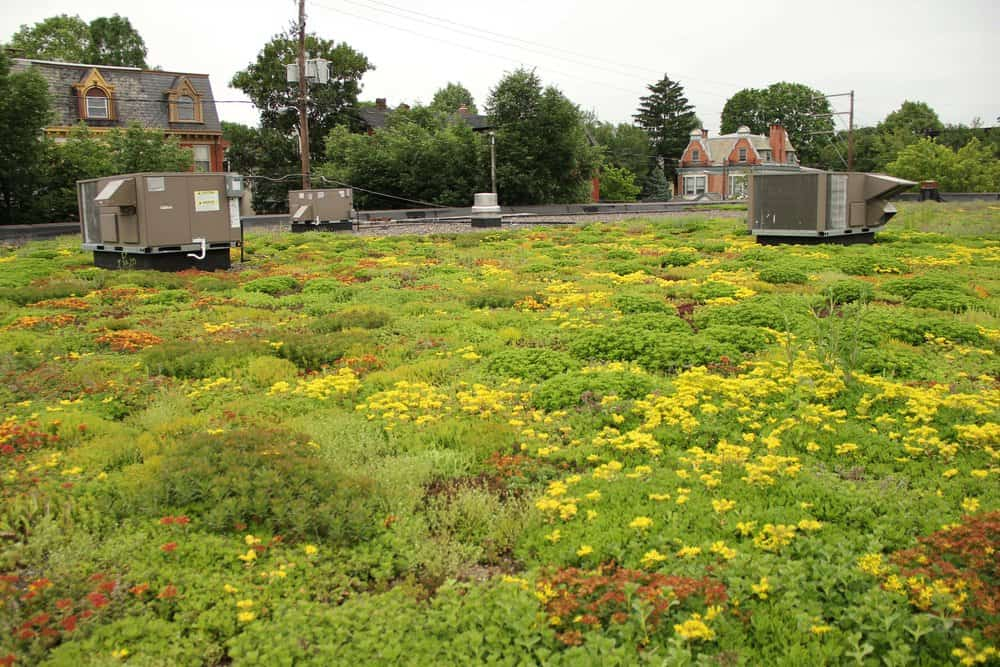 This green roof in Lancaster, Pa., is part of the town's plan for reducing Chesapeake tributary pollution.  Photo by Steve Droter/Chesapeake Bay Program