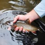 The Brook Trout Equation