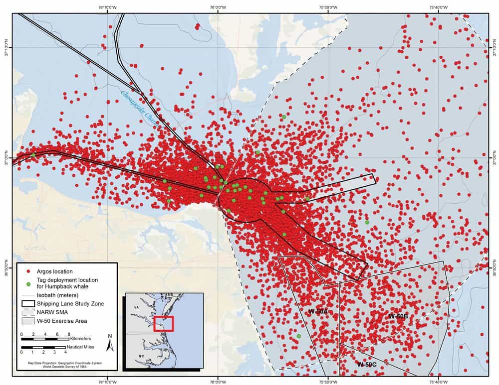 Whale contacts near the mouth of the Chesapeake Bay. Green dots are whale tagging locations. Red dots are satellite pings recorded when the whales breach. (Click to enlarge)   Courtesy   Aschettino et al. 2018/ navymarinespeciesmonitoring.us