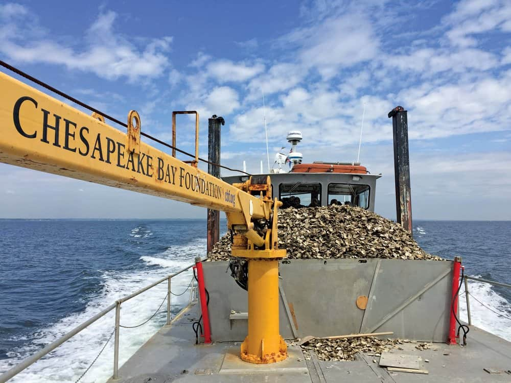 Patricia Campbell 's two-ton crane. -  Photo by Emmy Nicklin/CBF Staff
