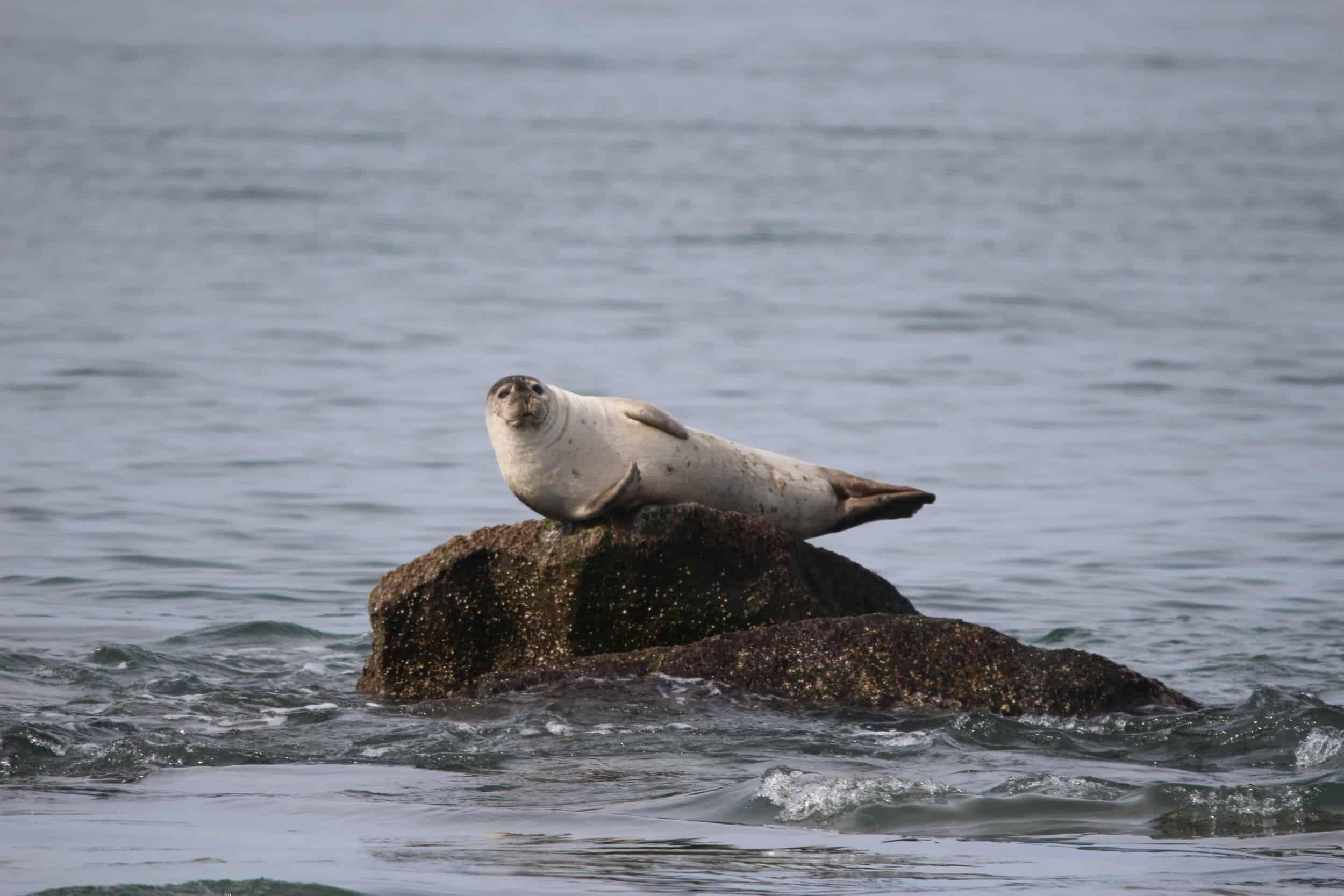Photo: Virginia Aquarium & Marine Science Center