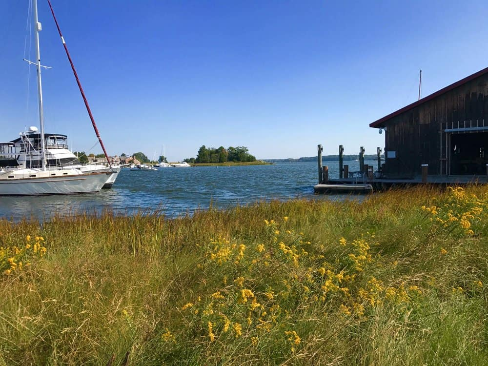 The thriving living shoreline at the Chesapeake Bay Maritime Museum.
