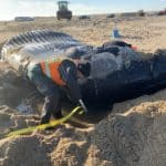 Young Humpback Whale Found Dead on Delaware Beach