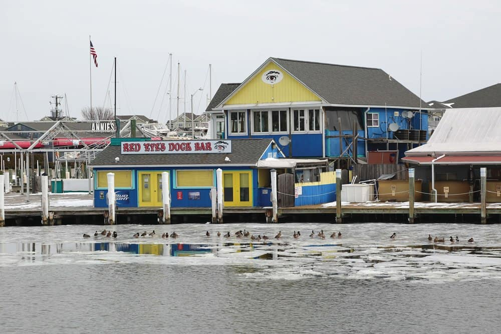 Ducks chill out on the ice in front of Red Eye's Dock Bar in Kent Narrows. Photo by Wendy Mitman Clarke