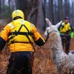 SLIDESHOW: Llama Rescued from Patuxent Floodwaters