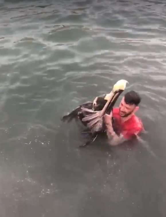Screen shot from the video posted to Hunter Hardesty's Facebook page, which led to animal cruelty charges in Key West.