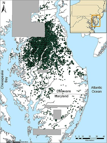 "This map shows the Delmarva Peninsula, with green dots indicating the locations of individual ""Delmarva pothole"" wetlands that were identified using lasers from airplanes (Light Detection and Ranging or LiDAR imagery). Gray areas on the map represent zones where LiDAR data were not available.(""Distribution, Morphometry, and Land Use of Delmarva Bays,"" by D. E. Fenstermacher and colleagues published in the journal Wetlands on October 8, 2014)"
