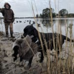 Wild Chesapeake: Waterfowl & End-of-Season Fishing Fun