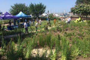 New Rain Gardens Join Trash Wheel at Baltimore Harbor