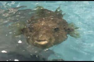 VIDEO: National Aquarium Opens Animal Rescue Center to Public