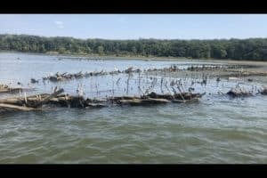 VIDEO: Mallows Bay Celebrates Marine Sanctuary Milestone