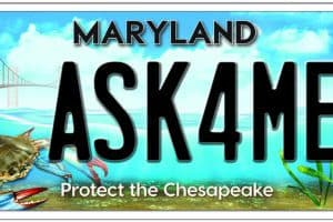 Md. Bay License Plate Sales Double