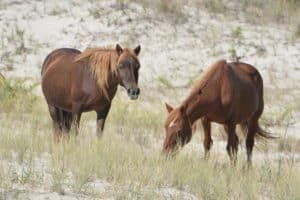 Assateague Island Entrance Will Cost More in 2020