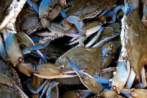 New Fish Consumption Warning Signs at Some Md. Waterways