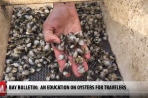 VIDEO: Hyatt Cambridge Adds Oyster Farming