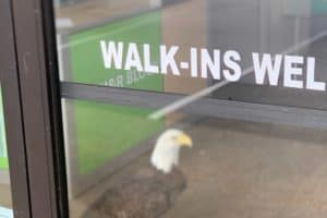 VIDEO: Bald Eagle Found inside Va. Beach Tax Business