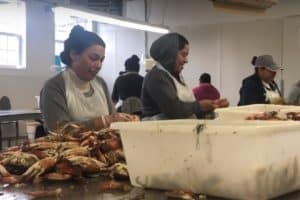 Md. Governor Calls for More Crab Worker Visas