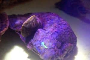 VIDEO: Md. Researchers Track Oysters by Making Them Glow