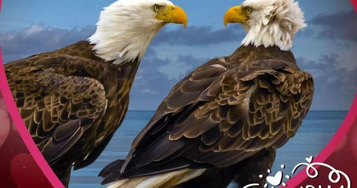 Bald Eagle Pair Naming Contest Results In