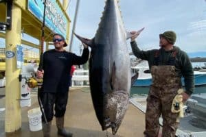 708-lb. Bluefin Tuna Sets Va. State Record
