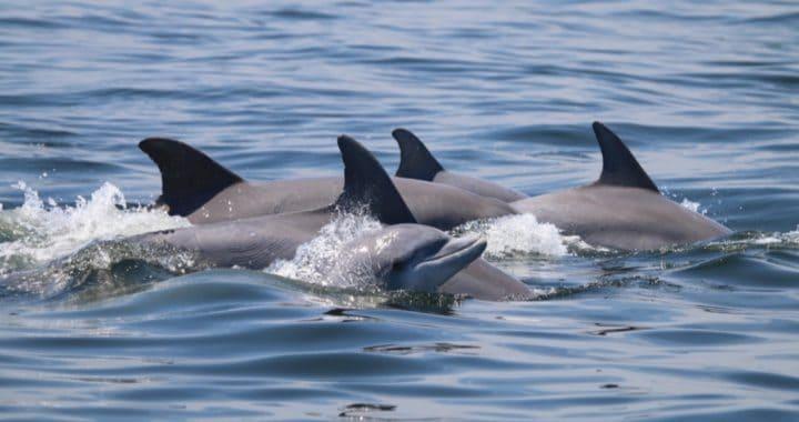 Dolphin Watch