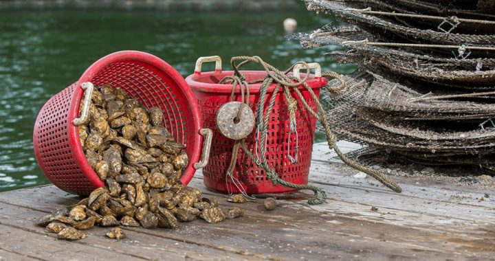 Study: Oyster Farm Industry Thriving (until COVID-19)