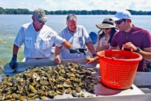 UMD Engineers Lead $10 Million Shellfish Aquaculture Project