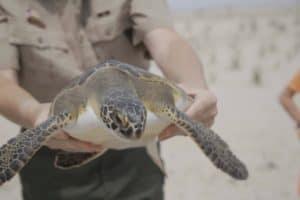 VIDEO: 300th Animal Saved in Aquarium Milestone