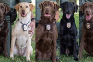 A Few Good Dogs Join Va. DGIF Conservation Police