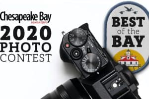Best of the Bay Photo Contest