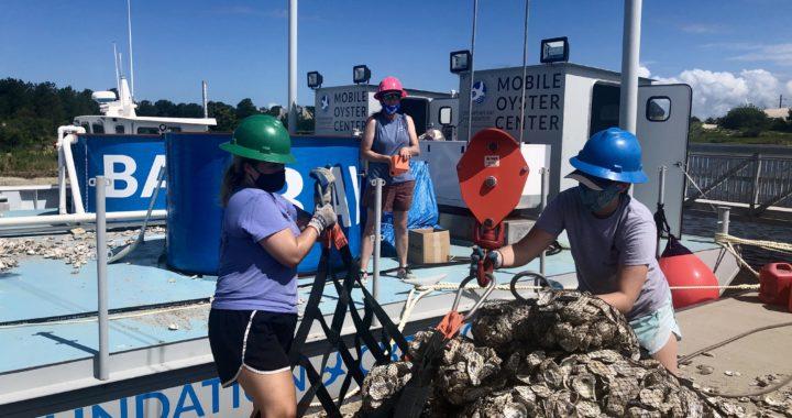 Bay's 1st Traveling Oyster Restoration Barge Up & Running
