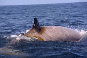 Navy Destroyer Helps Track Sonar's Impact on Whales off Va.