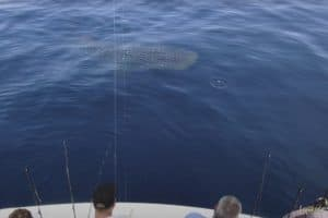 VIDEO: Close Encounter with World's Largest Shark Species off Ocean City