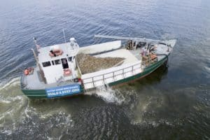 Millions More Protected Oysters Join Severn River Reef
