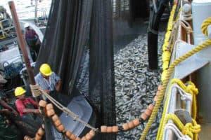 Landmark Menhaden Vote Links Catch Limits to Rockfish Abundance