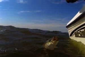 Md. Rockfish Season Closed Until September, Starting Sunday