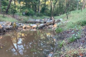VIDEO: Return of Frogs Marks South River Stream Restoration Success