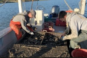 VIDEO: Oyster Industry Gets Boost after COVID-19 Blow