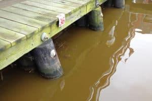 2020 Chesapeake Bay Dead Zone Near Historic Lows