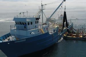 Atlantic Menhaden Harvest Cut 10 Percent