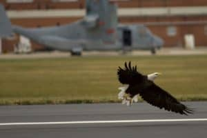 Eagle Mystery at NAS Pax River Runway