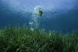 Study Details Plastic Pollution's Brutal Impact on Bay Life