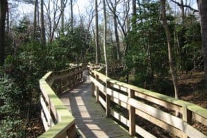 Cape Charles Nature Preserve Addition Protects Migratory Birds