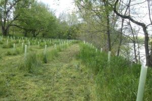 James River Tree Planting Effort Expands to .7 Million; Volunteers Needed