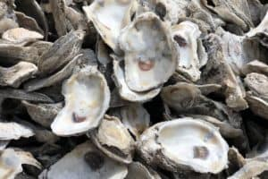 Va. Oyster Shell Recycling Record