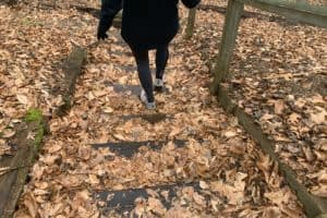 VIDEO: Bay-Region Park Popularity Continues with First Day Hikes