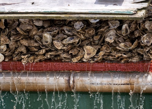 Weigh in on Large-Scale Eastern Shore Oyster Sanctuary