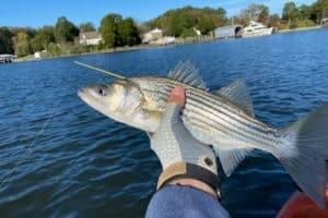 Public Comment to Shape Future of Rockfish Harvest
